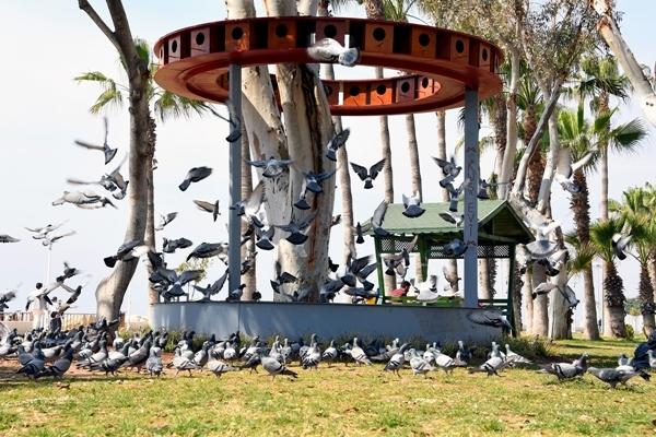 Mersin Büyükşehir Belediyesi 'den sahildeki kuşlar için 48 odalı kuş evi